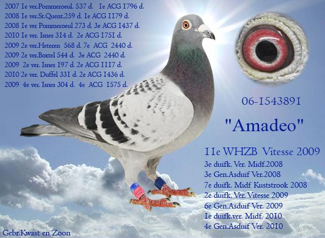 06-1543891_Amadeo